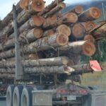 logs, tree trunks,  transportation,  industry, truck,
